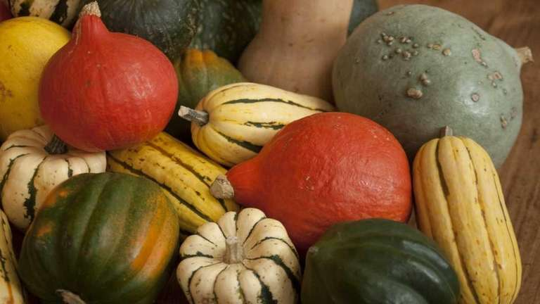 There are about a dozen winter squash varieties