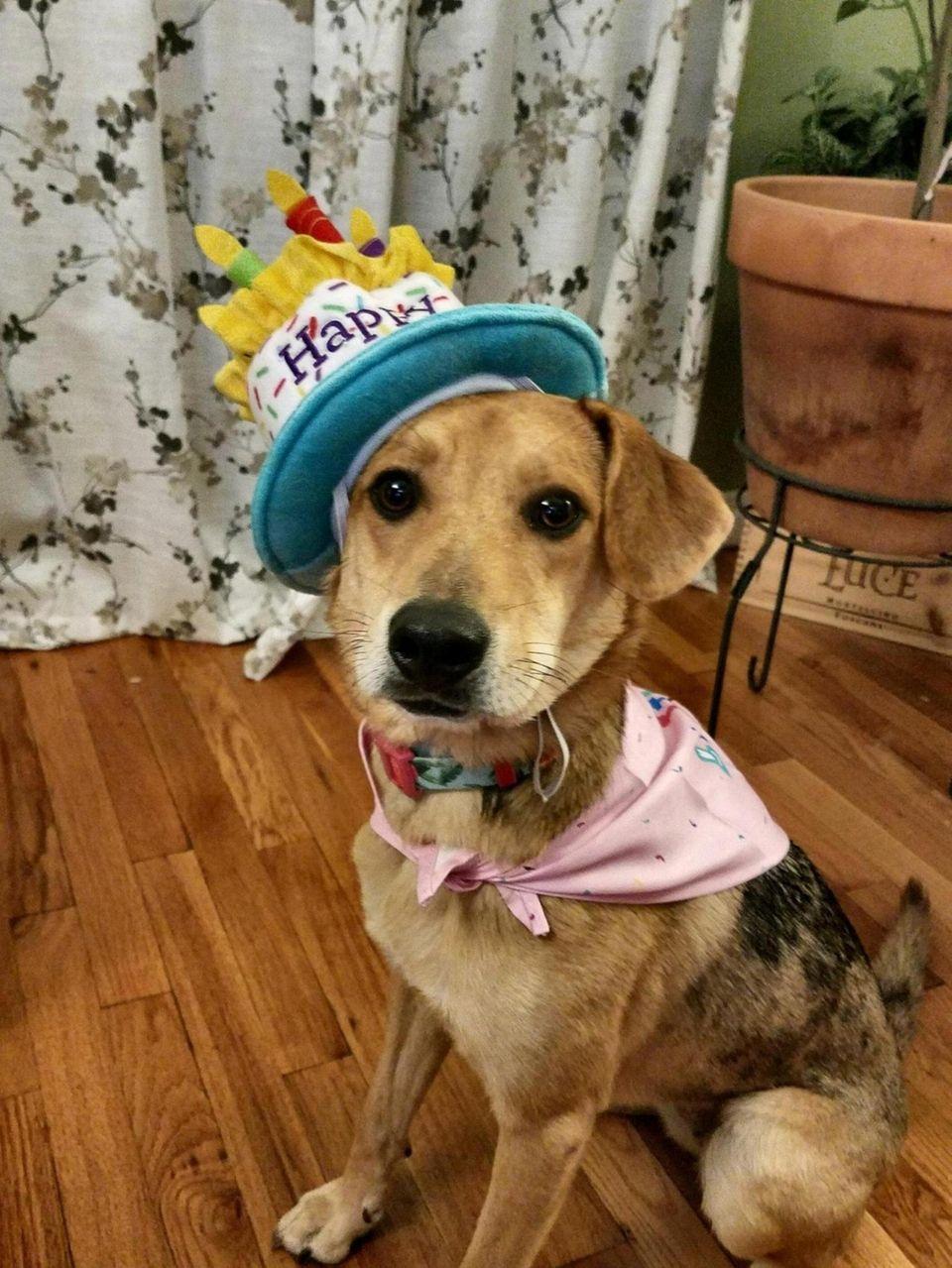 Happy 1st Birthday Lacie!