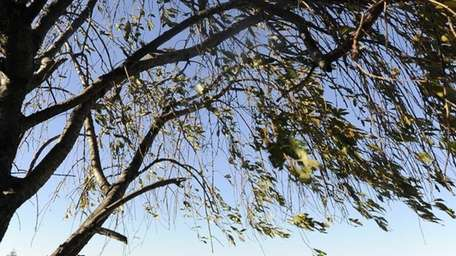Uniondale resident Josh Krawitz works on his golf