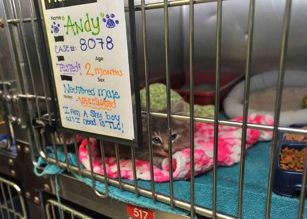 A 2-month-old kitten named Andy is up for