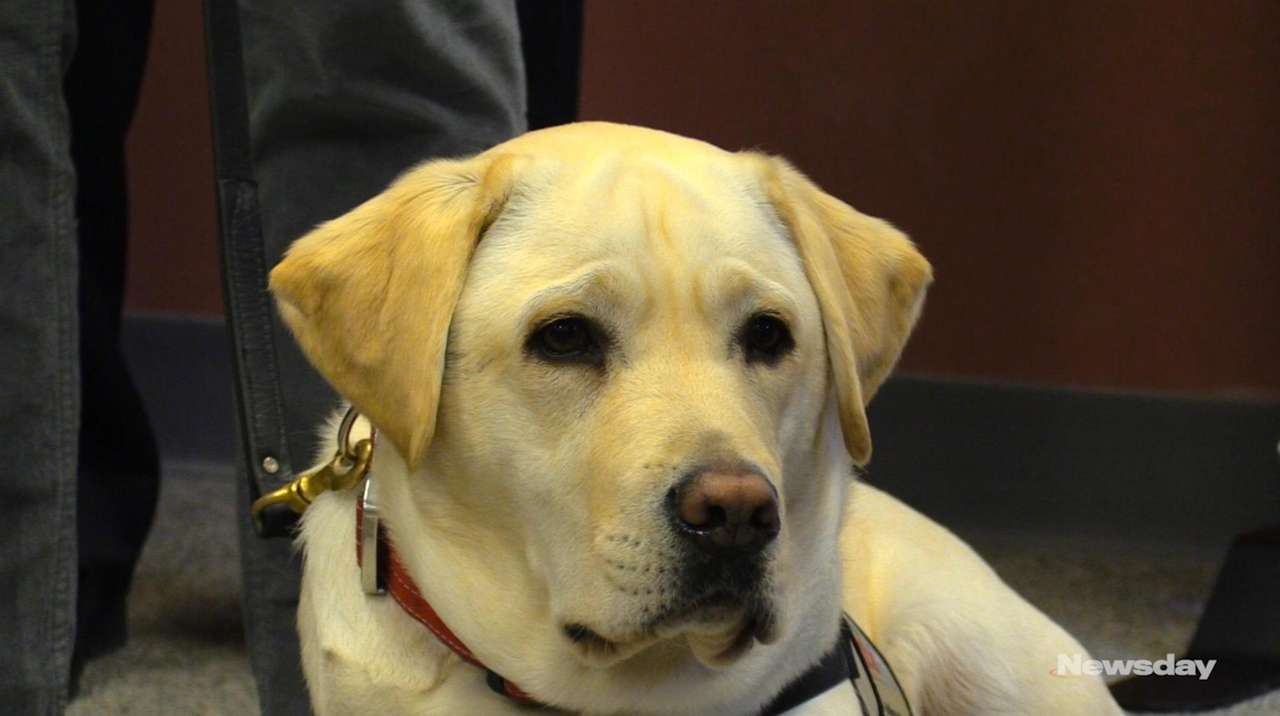 New Doj Advisory Service Animals And >> Sully President Bush S Service Dog Gets Hero S Welcome