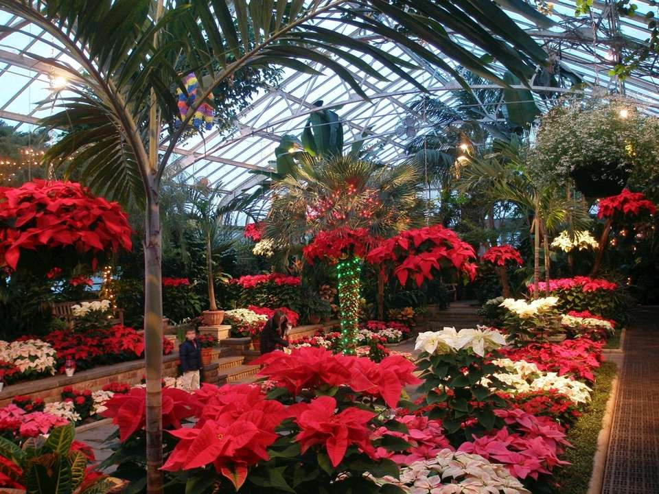 There will be a poinsettia and cyclamen display