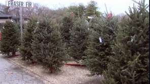 Expert tips to help you pick a tree