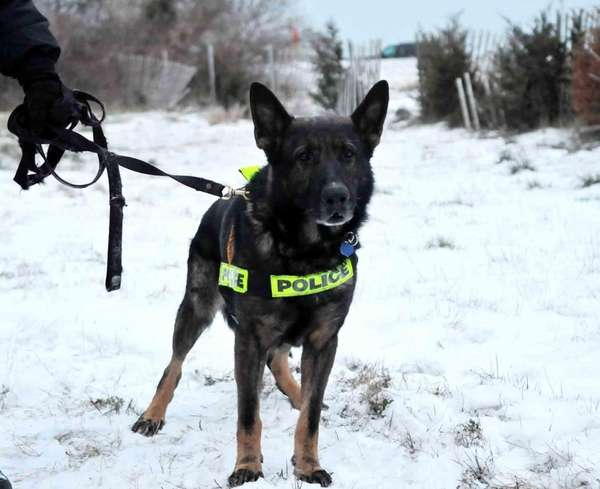A file photo of Suffolk County police K-9
