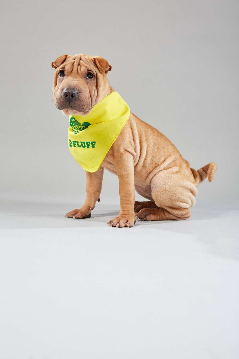 Puppy portrait for Puppy Bowl XV