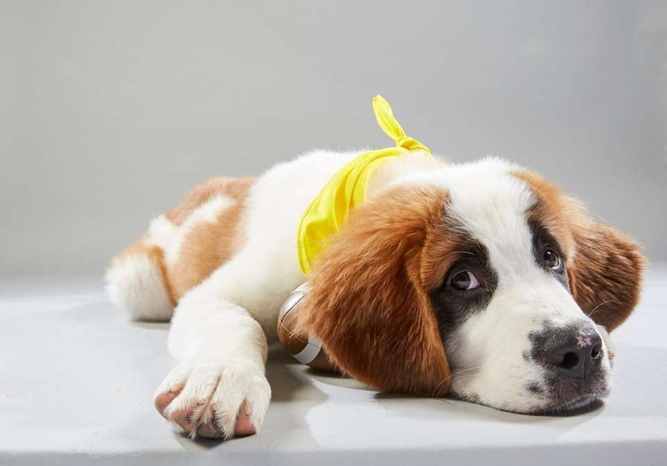 Puppy Bowl XV: Starting lineup who's who | Newsday