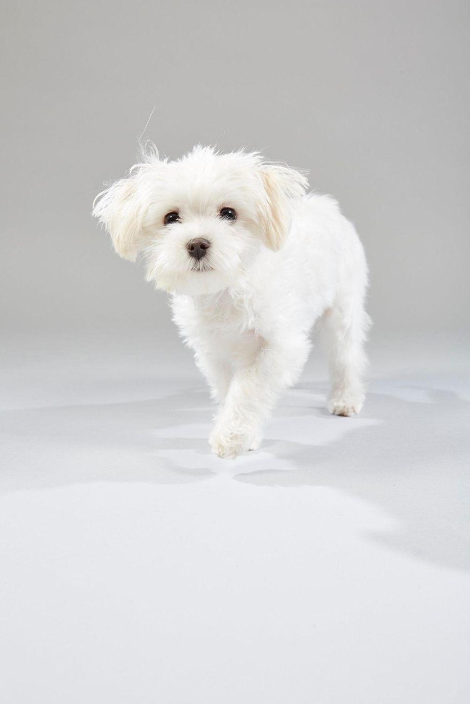 Puppy portrait for Puppy Bowl XV