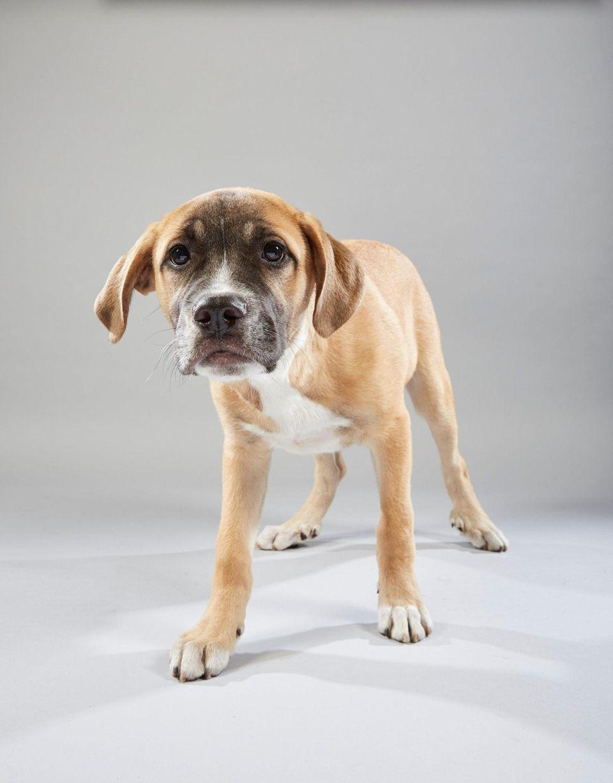 Alexander Puppy portrait for Puppy Bowl XV