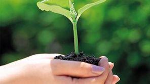 Seedling fresh for planting.