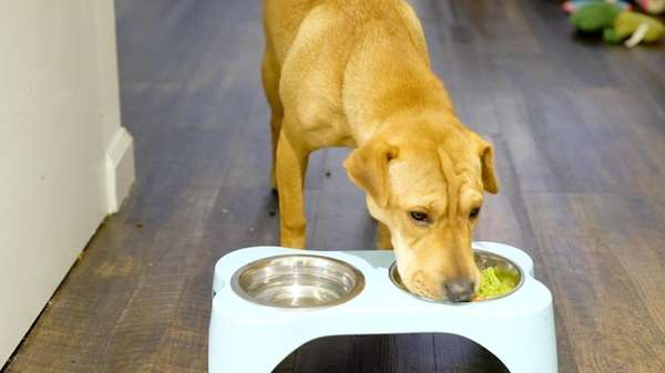 Millennials boost LI businesses with organic dog food and doggy day care  splurges