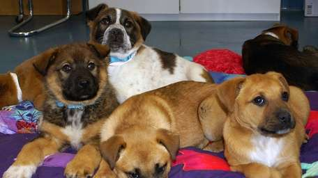 The Southampton Animal Shelter took in 21 dogs,