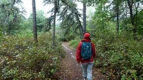 A hiker makes her way along a trail
