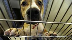 High salaries at Hempstead Animal Shelter Newsday reported