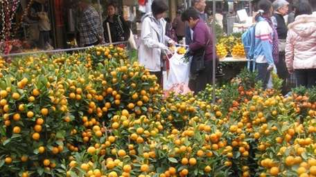 Mini orange trees are traditionally displayed for Chinese