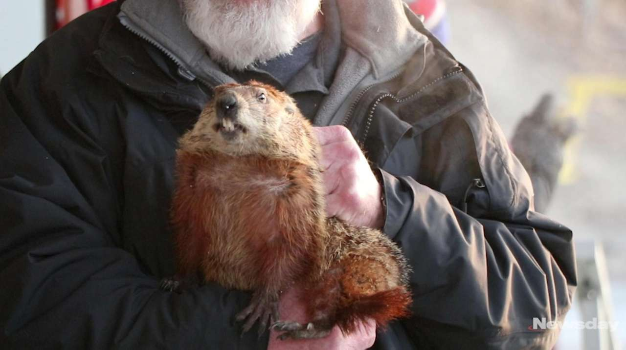 Local groundhogs Malverne Mel and Holtsville Hal, their