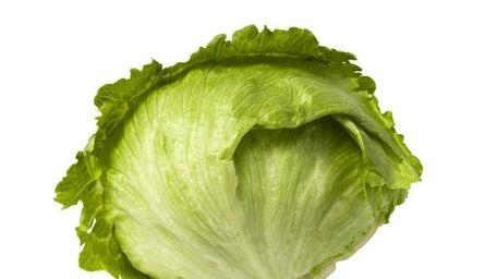 Stock photo of a head of iceberg lettuce.