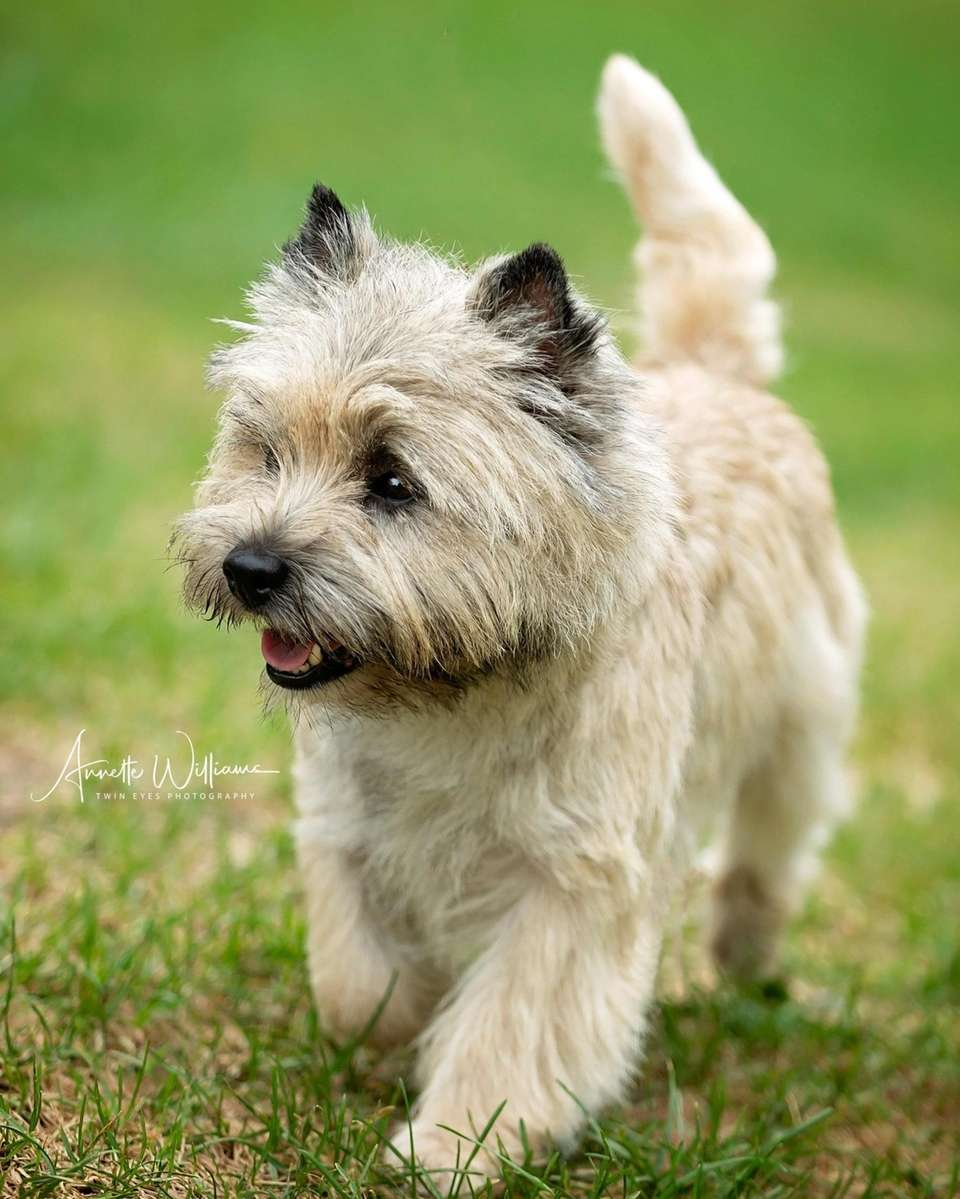 Nathan is a cairn terrier owned by Mary