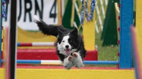 An all-new classic K9 Dog Show will be