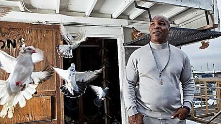 Tyson and pigeons