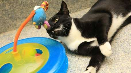 Cats need challenging toys to keep them occupied.