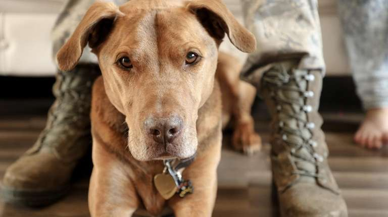 We need to better serve military dogs | Newsday