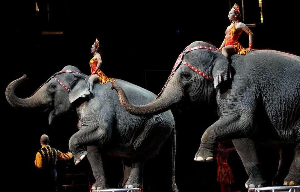 Elephants are a key ingredient at the Ringling