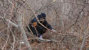 A Suffolk County police recruit searches along brush