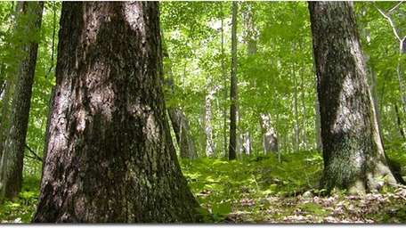 Maryland State Sustainable Forestry Council