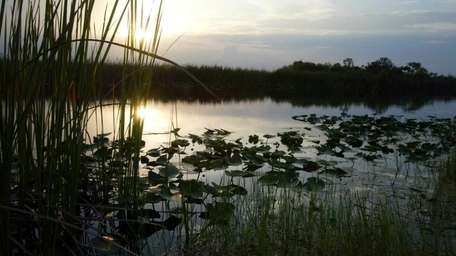 4. The Florida Everglades (June 5, 2003)