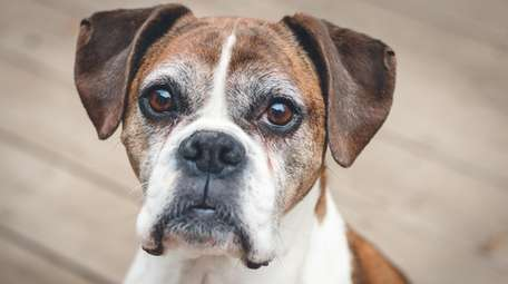 Gain the trust of a traumatized boxer, or