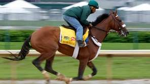 File photo of Mucho Macho Man, who Dave