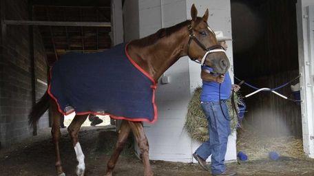 Kentucky Derby winner Animal Kingdom is walked in