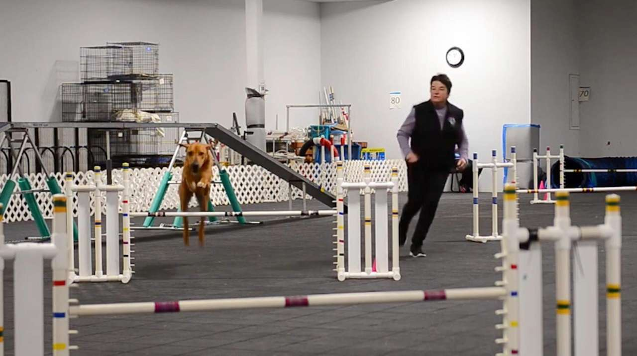 Agility, the Olympics for dogs, is finally getting