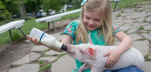 Benner's Farm in Setauket offers many workshops, festivals