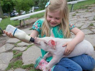 Benner's Farm in Setauket offers many workshops, festivals