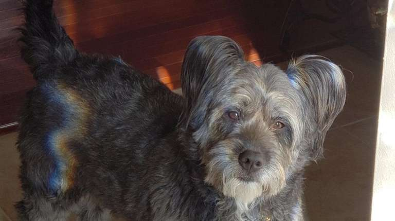 Lucy, a mixed breed rescue dog owned by