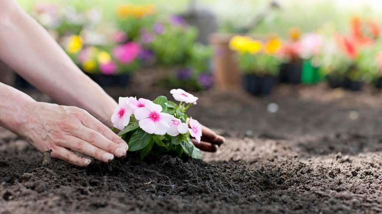 Tips and gardening chores for April.
