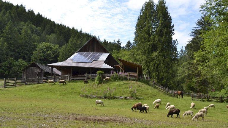 The barn at Leaping Lamb Farm in Oregon.