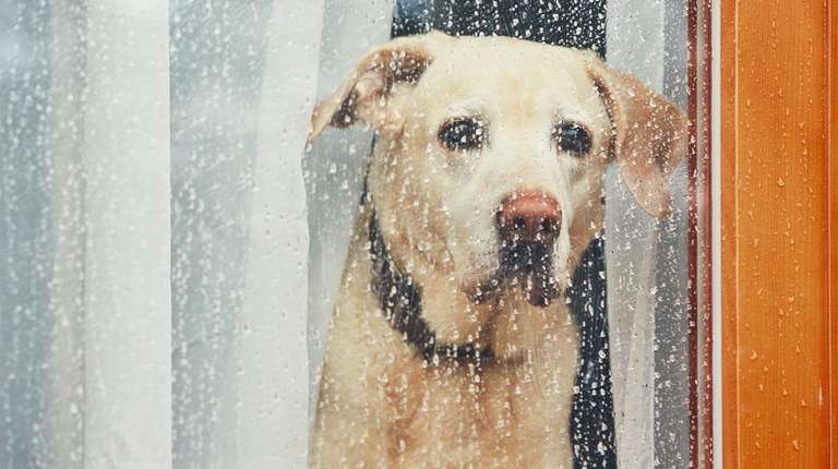 Dogs can grieve after losing an animal companion.