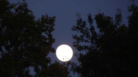 The moon through trees.