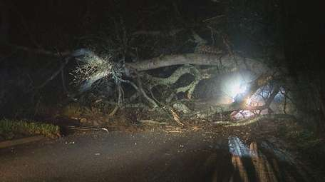 A tree toppled by strong winds on Murdock