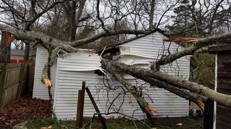 A tree fell on a small house on