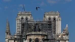 A pigeon flies over Notre Dame cathedral, in