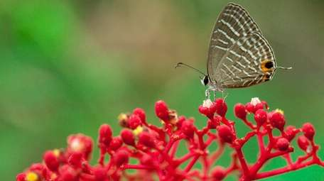 Many plants attract butterflies and other pollinators.