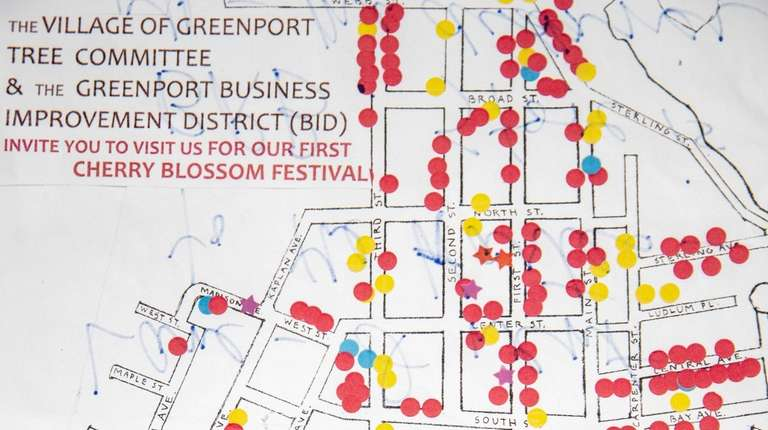 Greenport's cherry blossoms are blooming - but not for long ... on iris map, beach map, cherry blue, banana map, cocoa map, strawberry map, honeysuckle map, tree map, coconut map, pineapple map, coffee map, butterfly map, dragonfly map, marathon map, bamboo map, cherry blossoms bloom washington dc, champagne map,