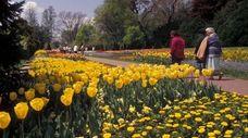 The tulip garden at Longwood Gardens in Kennett