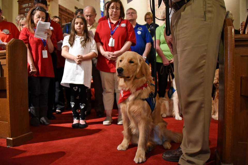 """A """"comfort dog"""" named Abraham has been assigned"""