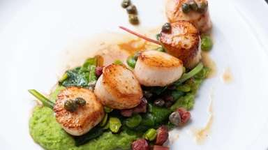 Sea scallops are served atop an almond-pea puree