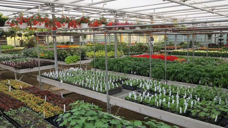 Plants for sale at the Farmingdale Sate College