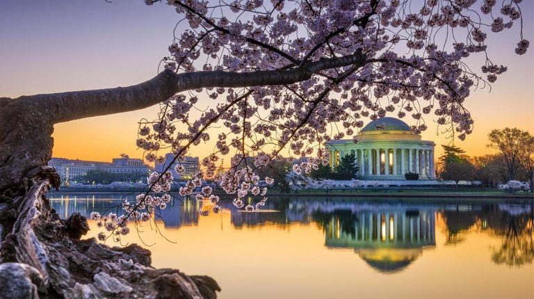 The Jefferson Memorial during cherry blossom season. It's